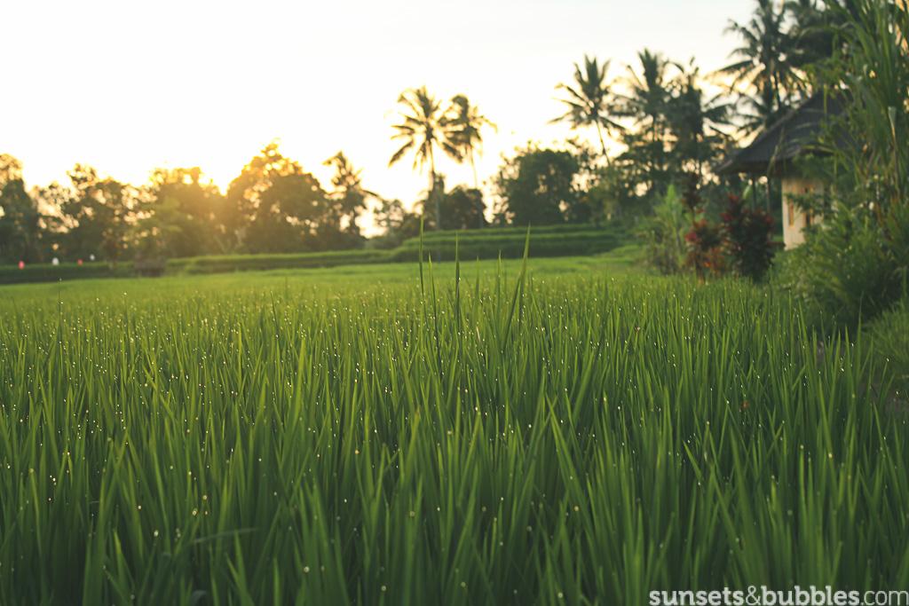 instagram-photographer-specialist-travel-photography-bali-ubud-ricepaddies