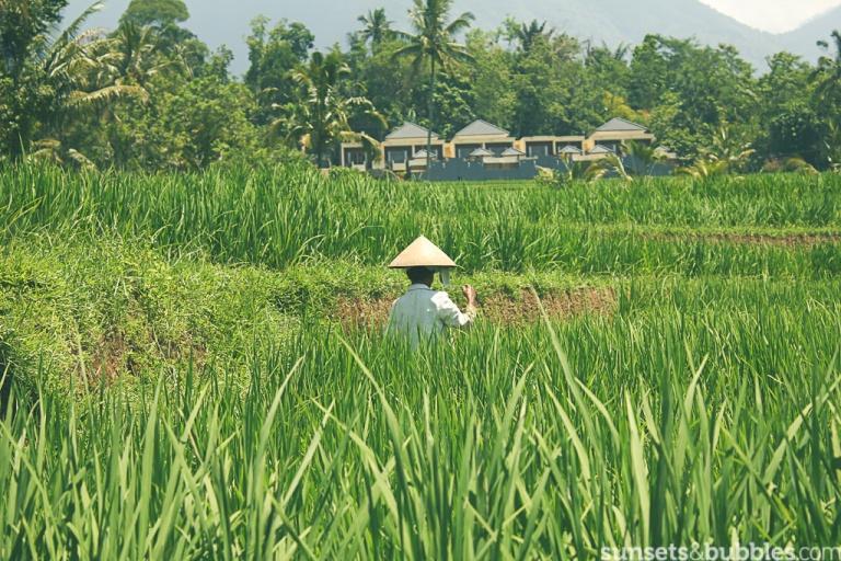 instagram-specialist-photographer-travelphotography-india-ricepaddies-worker-bali